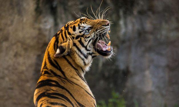 Blog animaux : quel animal est considéré comme le moins intelligent de tous ?